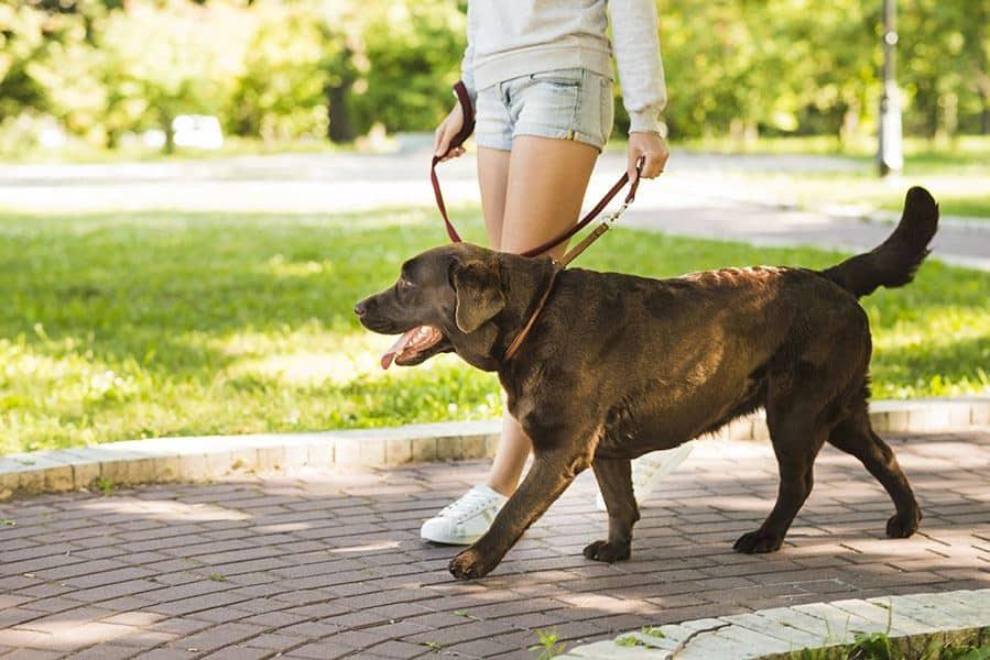 Make 1000 dollars walking dogs